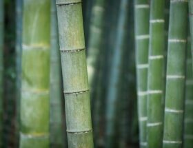 tanaman pembatas dengan pohon bambu